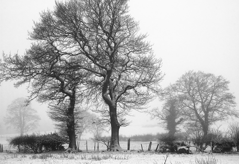 'Two Trees'