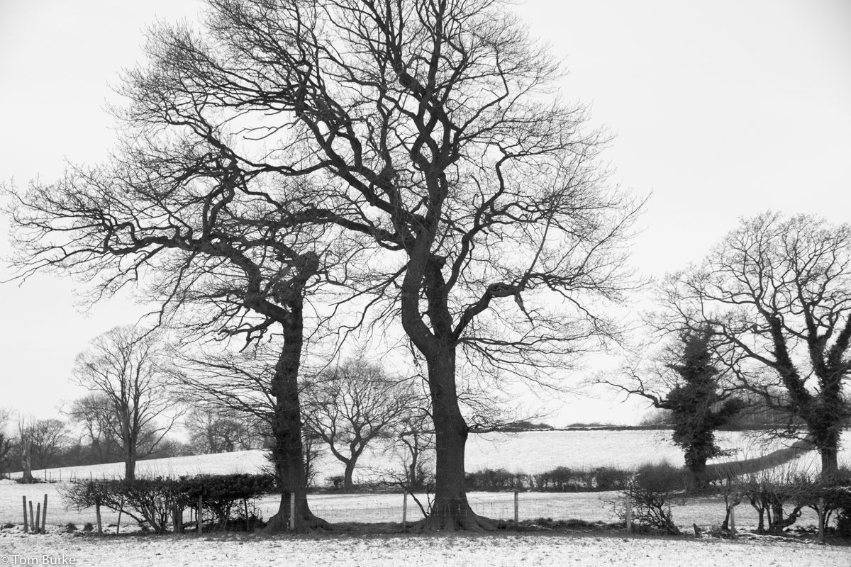 Two_Trees_snow_Jan2013_1200_1003
